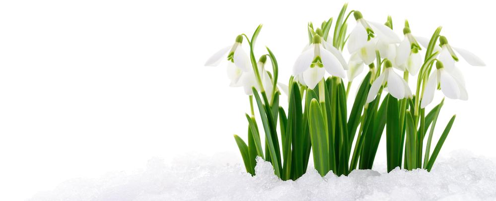 Våren är äntligen här